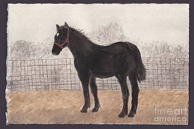 Percheron Colt In November Fog Poster by Conni Schaftenaar