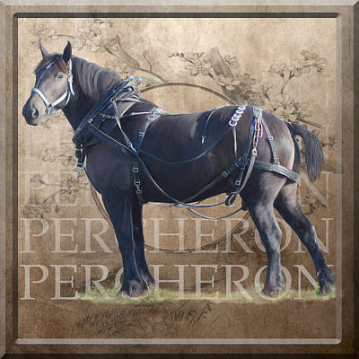 Percheron Draft Horse In Harness Poster