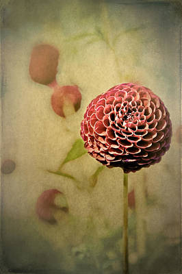 Perennial Gardens - Fall #01 Poster by Loriental Photography