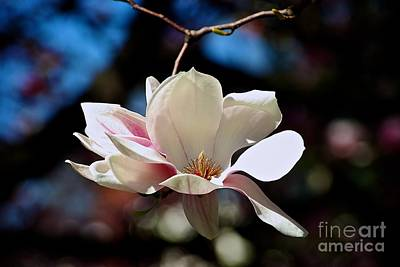 Perfect Bloom Magnolia Poster