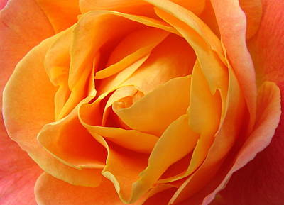 Perfect Peach Rose Poster by Ramona Johnston