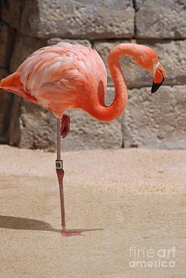 Perfect Pink Flamingo Poster by DejaVu Designs