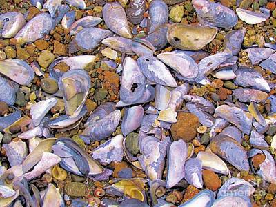 Periwinkles Muscles And Clams Poster by Elizabeth Dow