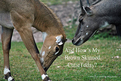 Nilgai Antelope Poster