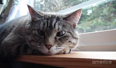 Pet Portrait - Lily The Cat Poster