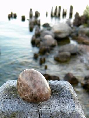 Petoskey Stone 1 Poster by Cheryl Parker
