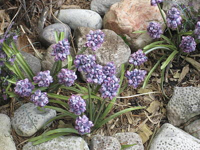 Petoskey Stones And Purple Flowers Poster by Dotti Hannum