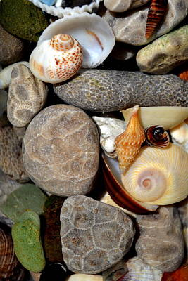 Petoskey Stones Ll Poster by Michelle Calkins