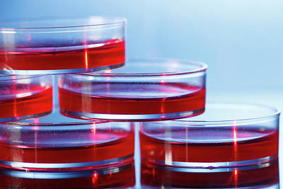 Petri Dishes With Red Liquid Poster