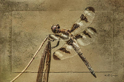 Petrified Dragonfly Poster by Jeff Swanson