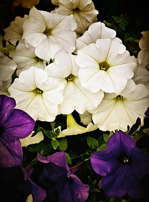 Petunias Poster by Susan Kinney