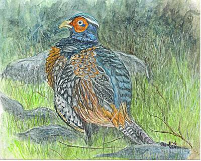 Poster featuring the drawing Pheasant Common Male by Carol Wisniewski