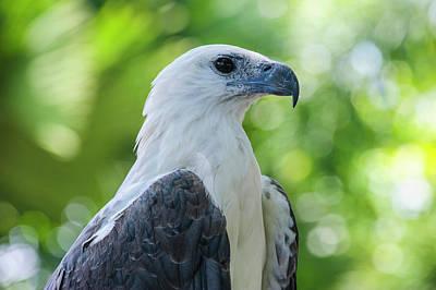 Philippine Eagle (pithecophaga Jefferyi Poster by Michael Runkel