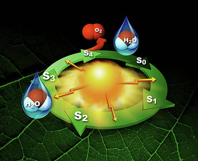 Photosynthesis Photosystem II Poster by Slac National Accelerator Laboratory, Lbl