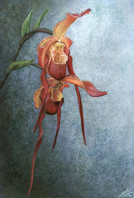 Phragmipedium Bouley Bay Poster