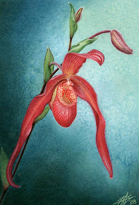 Phragmipedium Fire Cascade Poster