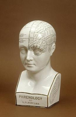 Phrenology Head Poster by Science Photo Library