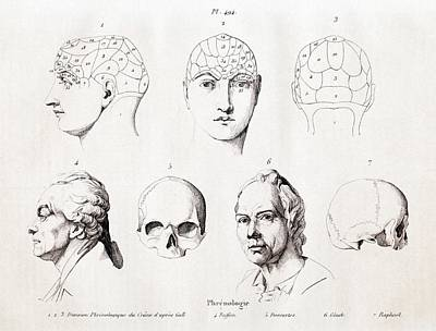 Phrenology Of Famous Heads Poster by Paul D Stewart