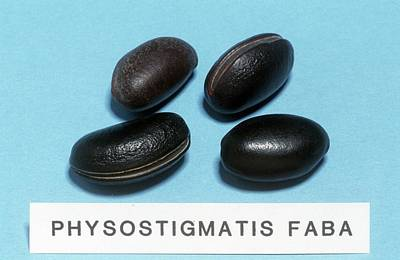 Physostigmatis Faba Sample Poster by Science Photo Library
