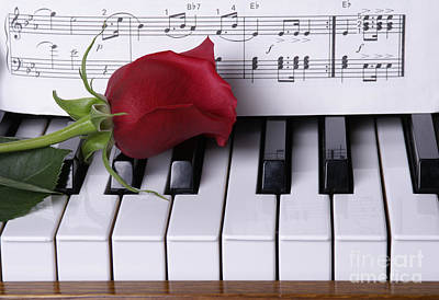 Piano With Red Rose Poster