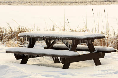Picnic Table In Winter Poster by Louise Heusinkveld
