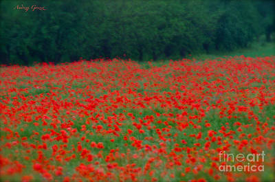 Pictorial Photography Poppy Fields At Galicia. Tribute To Alfred Stieglitz . Poster
