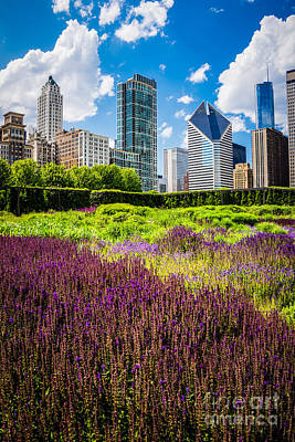 Picture Of Chicago Skyline With Lurie Garden Flowers Poster