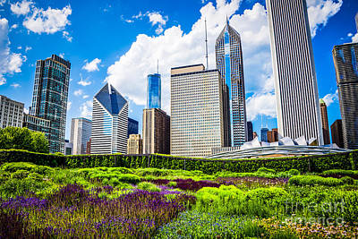 Picture Of Lurie Garden Flowers With Chicago Skyline Poster by Paul Velgos