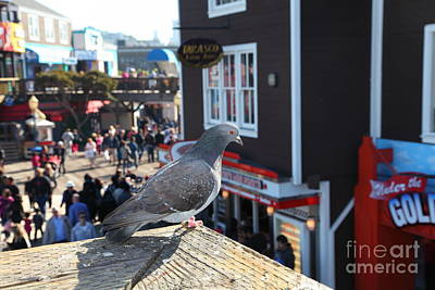 Pigeon Enjoying Pier 39 In San Francisco California 5d26131 Poster by Wingsdomain Art and Photography