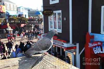 Pigeon Enjoying Pier 39 In San Francisco California 5d26131 Poster