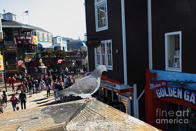Pigeon Enjoying Pier 39 In San Francisco California 5d26132 Poster by Wingsdomain Art and Photography