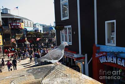 Pigeon Enjoying Pier 39 In San Francisco California 5d26132 Poster