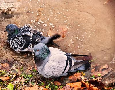 Pigeons Bathing Poster by Chris Flees
