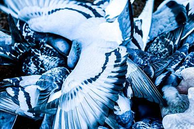 Pigeons Life Poster