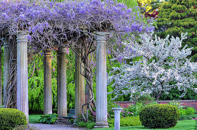 Pillars Of Wisteria Poster by Michael Hubley