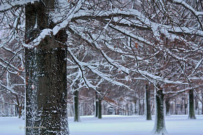 Poster featuring the photograph Pin Oak Snow by Ann Murphy