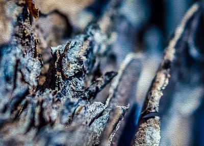 Pine Bark Abstract Poster