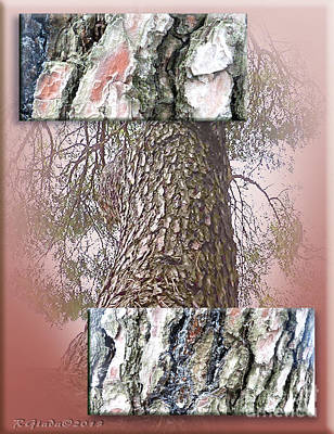 Pine Bark Study 1 - Photograph By Giada Rossi Poster by Giada Rossi