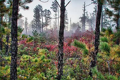 Pine Barrens Burn Poster by Season Bonner