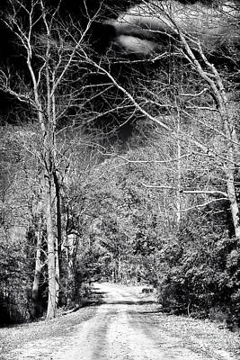 Pine Barrens Path Poster by John Rizzuto