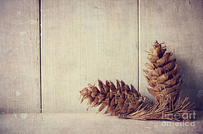 Pine Cones Poster by Jelena Jovanovic