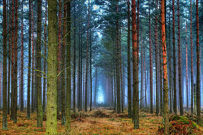 Pine Forest In Morning Fog Poster by EXparte SE