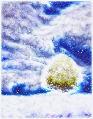 Pine Tree In Winter Poster