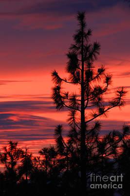 Pine Tree Sunrise Poster by James Eddy