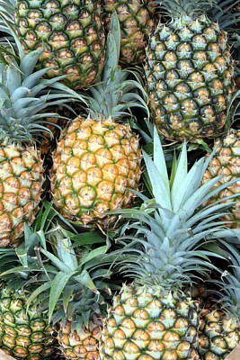 Pineapple Paradise Poster by Karen Nicholson