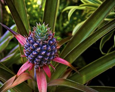 Pineapple Royal Poster