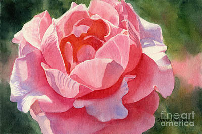 Pink And Orange Rose Blossom Poster