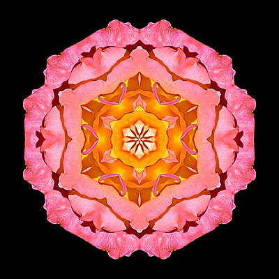 Pink And Orange Rose I Flower Mandala Poster