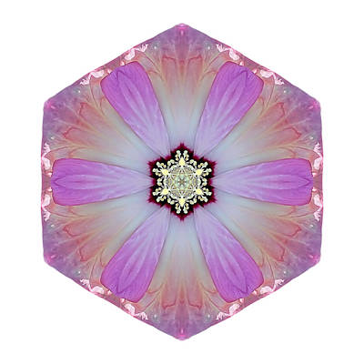 Pink And White Hibiscus Moscheutos I Flower Mandala White Poster