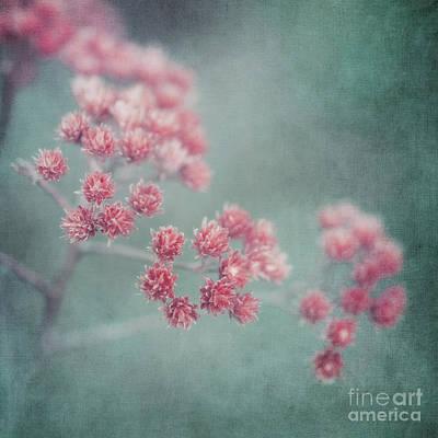 Pink Beauty Poster by Priska Wettstein
